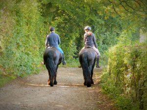 Paardrijden in de bossen en over holle wegen
