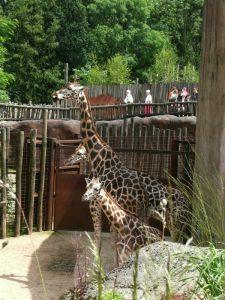 GaiaZOO in Kerkrade is een bekroonde dierentuin