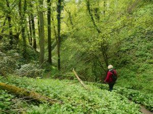 Een wandeling door het Savelsbos in Zuid-Limburg