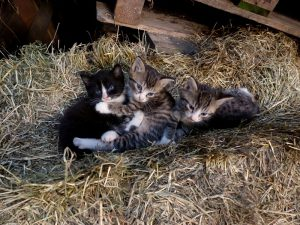 De kittens spelen in het stro
