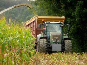 In oktober wordt het maïs van het land gehaald